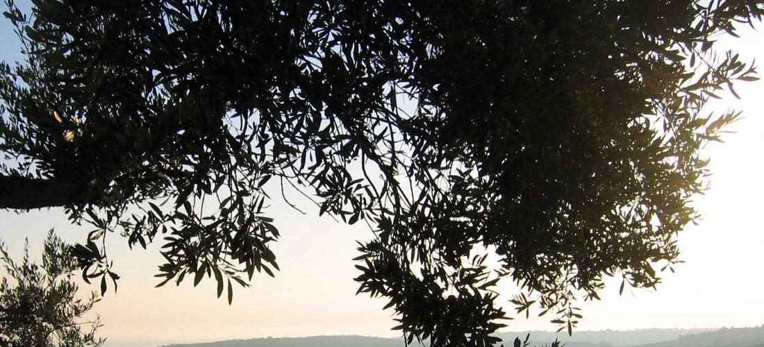 CORRIERE della SERA.<br> &#8220;Grazie al carrubo Menfi riscopre l'oro&#8221;