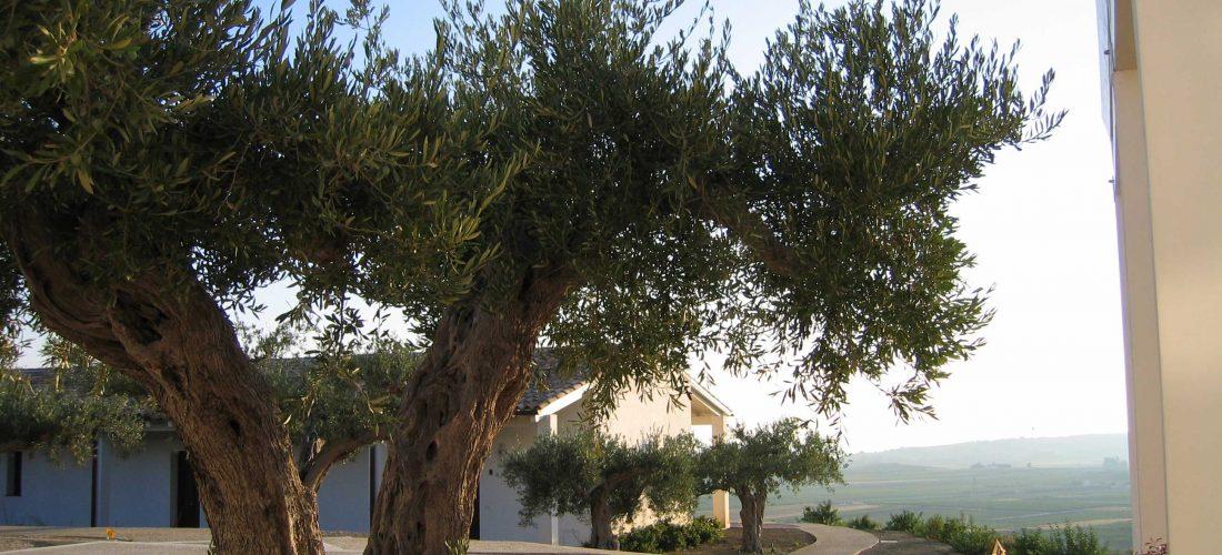"""THE TRAVEL NEWS. """"Il nome arabo significa carato, ricordo degli alberi di carrubo un tempo numerosissimi nella vallata di Menfi"""""""