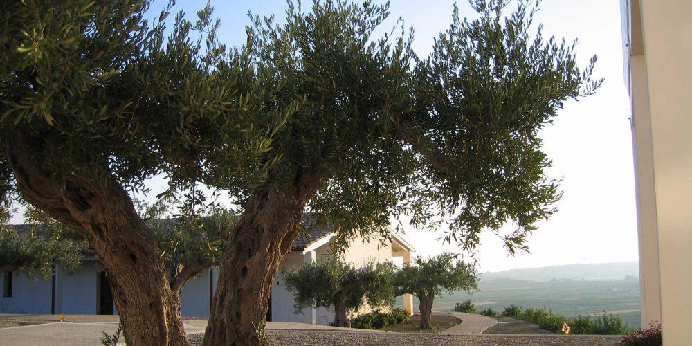 """THE TRAVEL NEWS.<br> """"Il nome arabo significa carato, ricordo degli alberi di carrubo un tempo numerosissimi nella vallata di Menfi"""""""