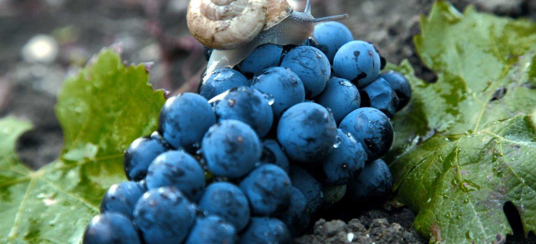 VdG MAGAZINE gustare viaggiare conoscere.<br> &#8220;Strade del vino: le Terre Sicane&#8221;
