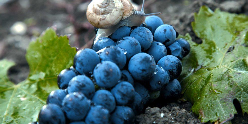"""VdG MAGAZINE gustare viaggiare conoscere.<br> """"Strade del vino: le Terre Sicane"""""""