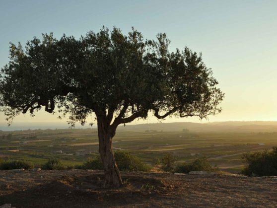 Khirat Menfi vacation rentals | landscape