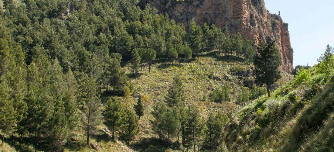 MONTE GENUARDO e SANTA MARIA del BOSCO<br></noscript> la Riserva Naturale Orientata